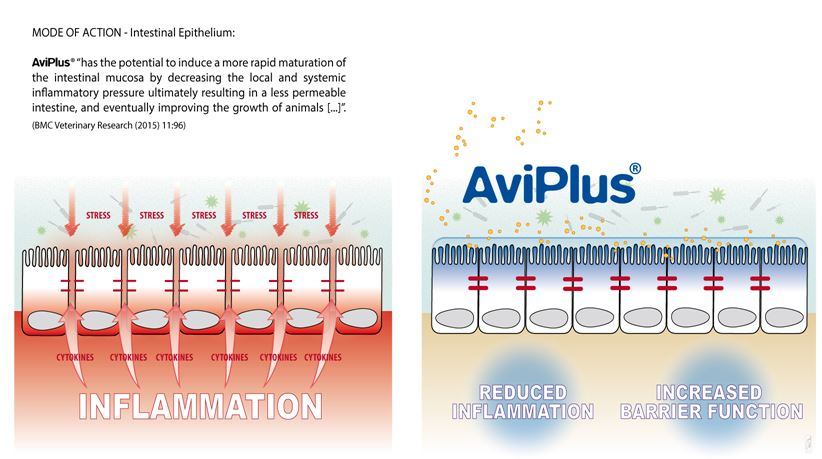 AviPlus® P Mode of Action